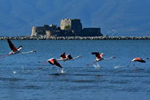 The birdlife of Nafplio